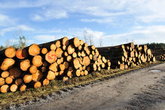 Heap of logs Royalty Free Stock Photos