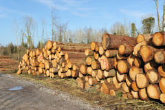 Heap of logs. The cut and chopped fire wood are stacked in a heap Stock Photo