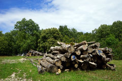 Heap of logs Royalty Free Stock Images