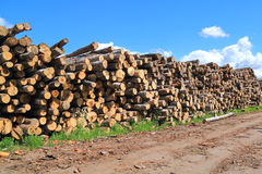 Heap of logs on sawmill in sunny day Royalty Free Stock Photos