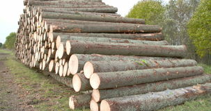 Heap of logs from spruce trees  FS700 4K stock video