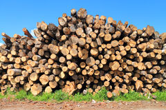 Heap of logs of various breeds of trees Royalty Free Stock Photos