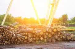 Heap of logs at the woodworking plant, beam stock photography