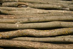 Heap of long wooden logs Royalty Free Stock Photos