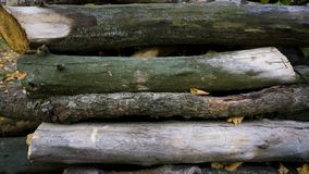Heap of long wooden logs stacked horizontally close-up royalty free stock photo