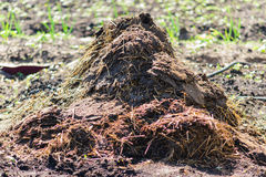 Heap of manure Royalty Free Stock Images