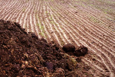 Heap of manure on the plowed field in autumn day. Preparation of the earth for winter Royalty Free Stock Images