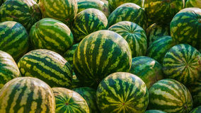 Heap Of Many Green Fresh Ripe Watermelons On Local Royalty Free Stock Photos