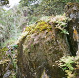 A heap of moss Stock Images
