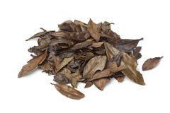 Heap of mountain tea leaves of the Meiji Royalty Free Stock Photo