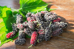 Heap of mulberry Stock Image