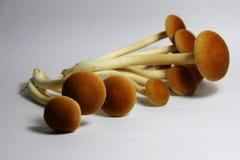 Heap of mushroom. Yanagi Mutsutake, heap of Japanese mushroom Royalty Free Stock Images