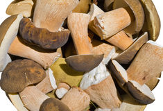 Heap of mushrooms 1 Stock Images