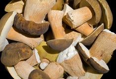 Heap of mushrooms 4 Royalty Free Stock Photo
