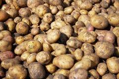 Heap of new raw potatoes stock photo