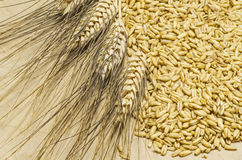 Heap of oat Royalty Free Stock Images