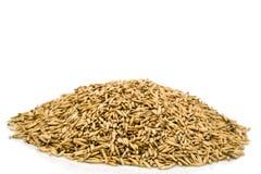 Heap oats Stock Images