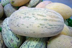 Heap of oblong melons stock image