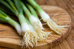 Free Heap Of Fresh Young Onion On The Wooden Background Stock Photo - 14497680