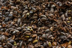 Heap of old brown coconut`s rinds Royalty Free Stock Image