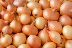 Heap of onions Royalty Free Stock Images