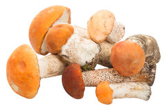 Heap of orange-cup boletus Stock Photography