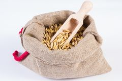 Heap of organic oat grains in jute bag, healthy nutrition, white background. Heap of organic oat grains with wooden spoon in jute bag on white background Royalty Free Stock Image