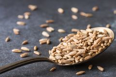 Organic Rye Berries on a spoon royalty free stock images