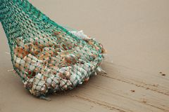 Heap of oyster in a net at sea beach stock images