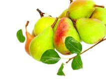 Heap of pear with stem and green leaf. Isolated. Royalty Free Stock Photography