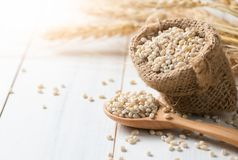 Heap of pearl barley on sack with ear of barley. On white wood, vegetarian food Stock Images