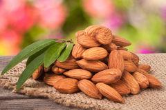 Heap of peeled almonds with leaf on a wooden table blurred garden background Royalty Free Stock Images