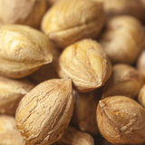 Heap of peeled hazelnuts Royalty Free Stock Images