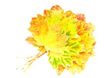 Heap of perfect Autumn Leaf over white. Isolated Stock Image