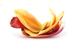 Heap of petals. Heap of tulip petals isolated on white Stock Images