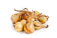 Heap of pickling onions Royalty Free Stock Image