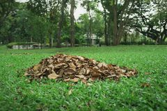 Heap Pile of leaves on a green glass stock image