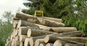 Heap of piled logs  4K FS700 Odyssey 7Q. Heap of piled big logs created from transferring them by a crane 4K FS700 Odyssey 7Q stock video footage