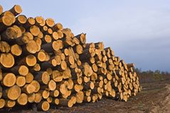 Heap of pine barrel Stock Images