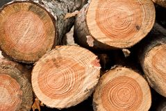 Heap of pine logs Royalty Free Stock Images