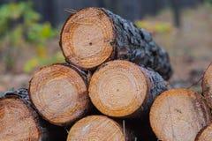 Heap of pine tree log Royalty Free Stock Photography