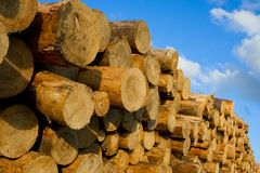 Heap of pine wood logs Stock Photography