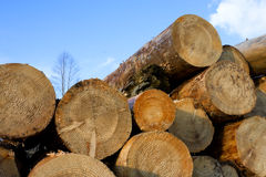 Heap of pine wood logs Royalty Free Stock Images