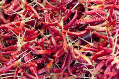 Heap of plenty red dried hot pepper for healthy nutrition. Delicious hot peppers for e.g. vegetarian food cuisine or a spicy bio diet Royalty Free Stock Photo