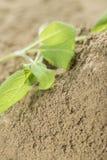 Heap of Powdered Sage stock photos