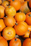 Heap of pumpkins Royalty Free Stock Images