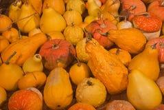 Heap of  pumpkins Stock Images
