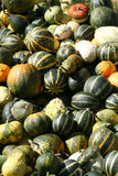 Heap of pumpkins Stock Photos