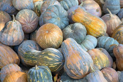 The heap of pumpkins Royalty Free Stock Photo