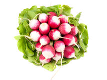 Heap of radish Royalty Free Stock Photos